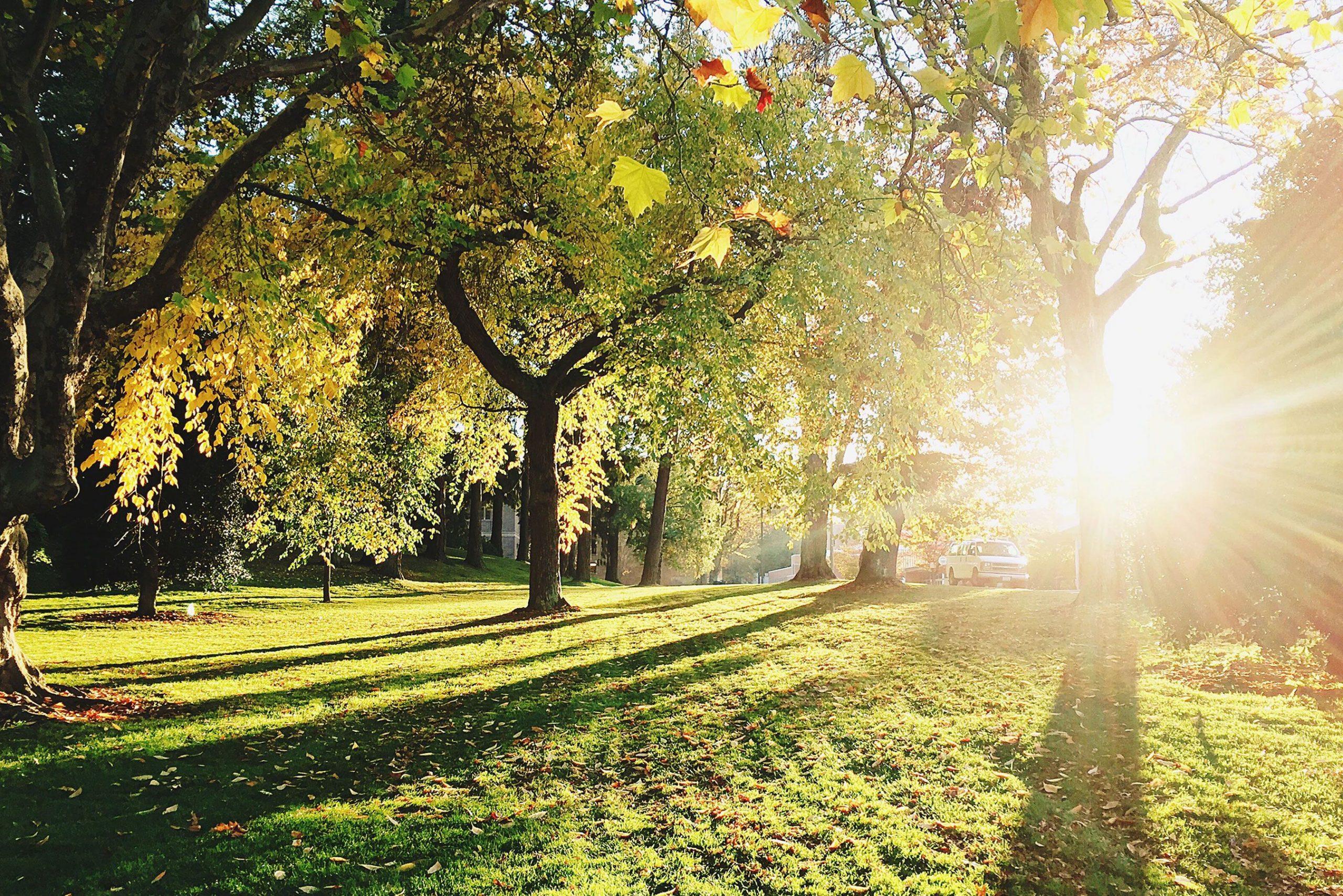 landscaper-planting-trees